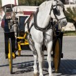 Stock Photo: Carriage