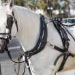Carriage — Stockfoto