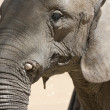 Elephant portrait — Stock Photo #9285684