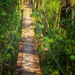 Suspended walking bridge in jungle — Stock Photo