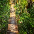 Suspended walking bridge in jungle - Stock Photo