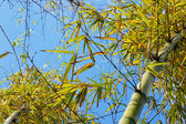 Bamboo against the sky — Stock Photo