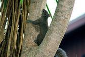 松鼠爬上树 — 图库照片