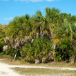 Cluster of palm trees along dirt road — Stock Photo #8681169