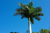 Palm tree against sky — Stock Photo