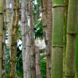 Close up of bamboo trees — Stock Photo