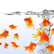 Goldfish — Stock Photo #8142147