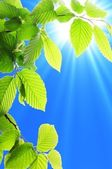 Blad en blauwe hemel — Stockfoto