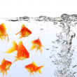 Goldfish — Stock Photo #8267264