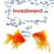 Investment — Stock Photo