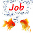 Find a job concept with goldfish — Stock Photo