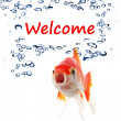 Welcome — Stock Photo #9297459