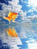 Mavi gökyüzü ve japon balığı — Stok fotoğraf