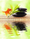 Zen or spa — Stock Photo