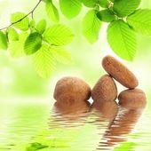 Zen stones — Stock fotografie
