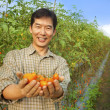 Asian farmer holding tomato on his farm — Stock fotografie