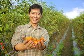 Asian farmer holding tomato on his farm — Stock Photo