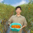 Middle aged happy  asian farmer holding tomato on his farm — Stock Photo