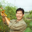 Middle age asian farmer holding tomato on his farm — Stock Photo