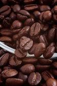 Kávové zrna — Stock fotografie