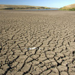 Dry earth, dirt, cracks - Stock Photo