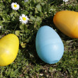 Three eggs in grass with daisies — Stock Photo