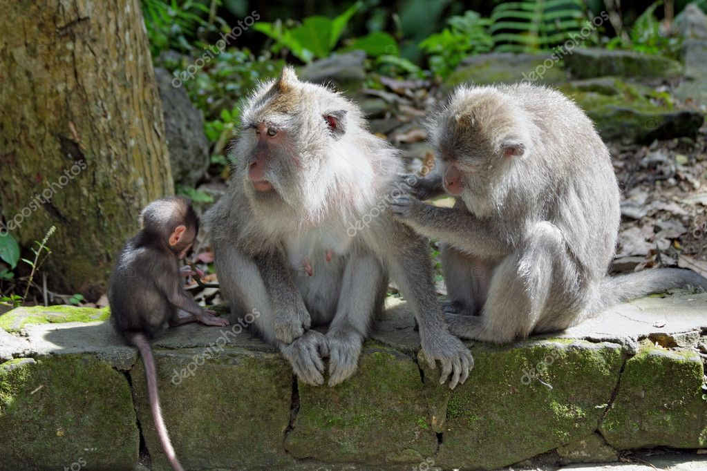 Monkey forest, Ubud on Bali, Indonesia  Stock Photo #8364115