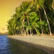 tropical beach — Stock Photo #8570748