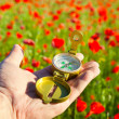 Royalty-Free Stock Photo: Compass in a Hand / Discovery / Beautiful Day / Red Poppies in N