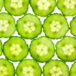 Slices of fresh Cucumber / background / back lit — Stock Photo