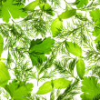 Fresh Basil, Parsley and Dill / background / isolated on white / — Stock Photo #9331040