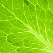 Fresh Green Leaf / Super Macro — Stock Photo