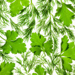 Fresh Parsley and Dill / close-up background / back-lit — Stock Photo