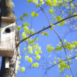 Bird house and young spring  leaves - Stock Photo