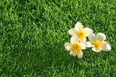 Grass background & flowers — Stock Photo