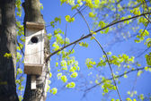 Bird house and young spring leaves — Stock Photo