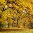 Autumn / Gold Trees in a park — Stock Photo