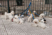 Moored dogs — Stock Photo