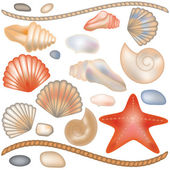 Set seashells and starfish isolated, vector illustration — Stock Vector