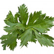 Parsley — Stock Photo #8676157