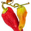 Stock Photo: Rotten bell peppers