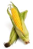 Espiga de milho isolado em um fundo branco — Foto Stock