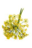 Macro of dill flower — Stock Photo