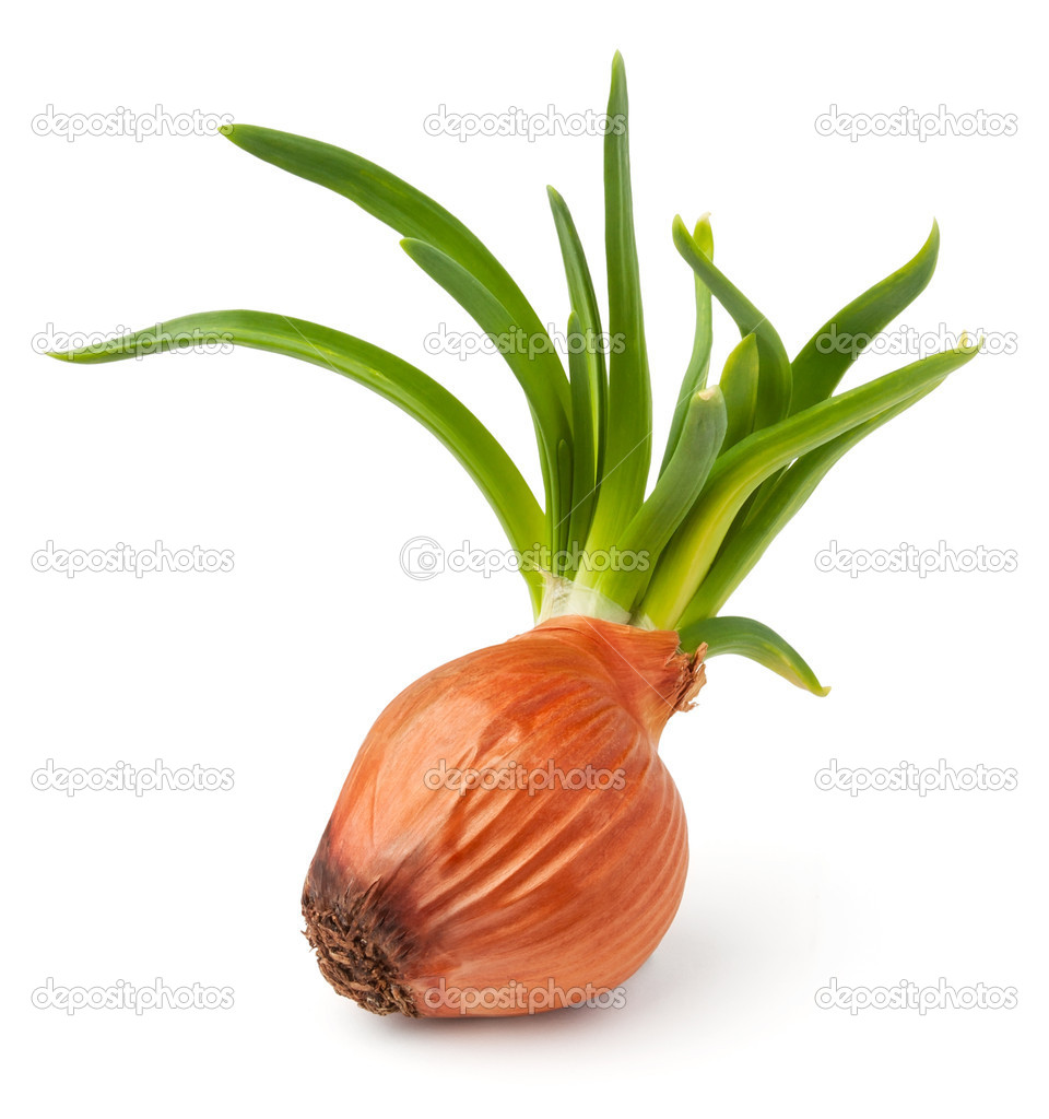 Grown onion against white background — Stock Photo #9389272