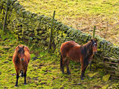 Horses browsing in the fields. — Stock Photo