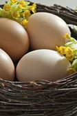 Brown eggs in a brushwood nest. — Stock Photo