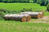 Hay bales. — Stock Photo