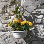 Flowerpot. — Stock Photo