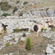 Rupestrichurch. Matera. Basilicata. Italy. — Stock Photo #8066392