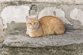 Orange tabby cat crouched on stair-step. — Stock Photo